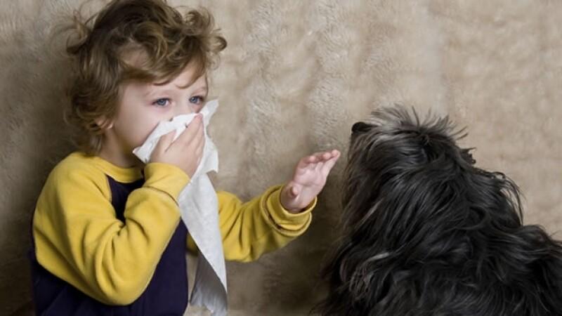 mascotas alergias