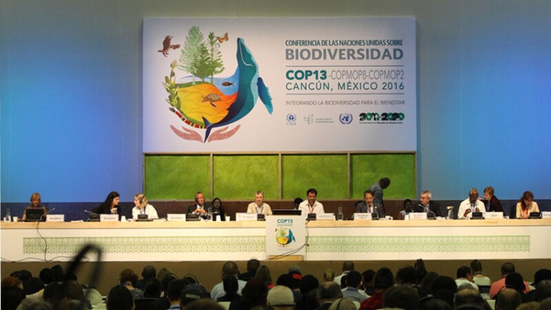 Piden integrar la biodiversidad como