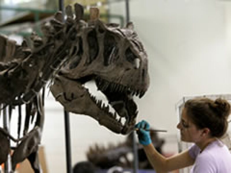 Las ventas de restos de dinosaurios han aumentado su éxito en los últimos años. (Foto: AP)