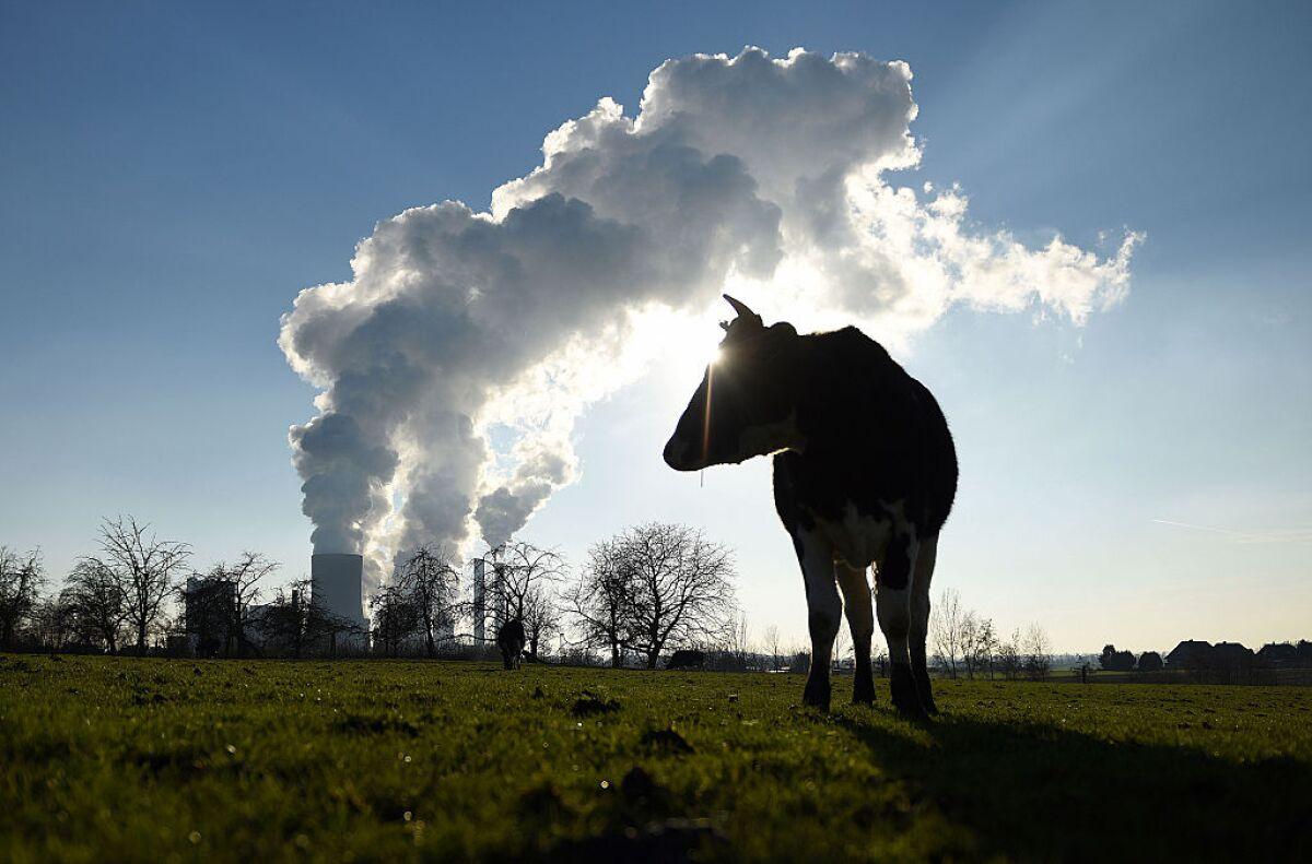 Vuélvete vegano, salva al planeta