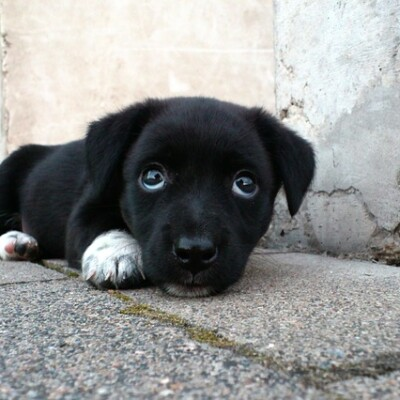 dog-173720_640.jpg