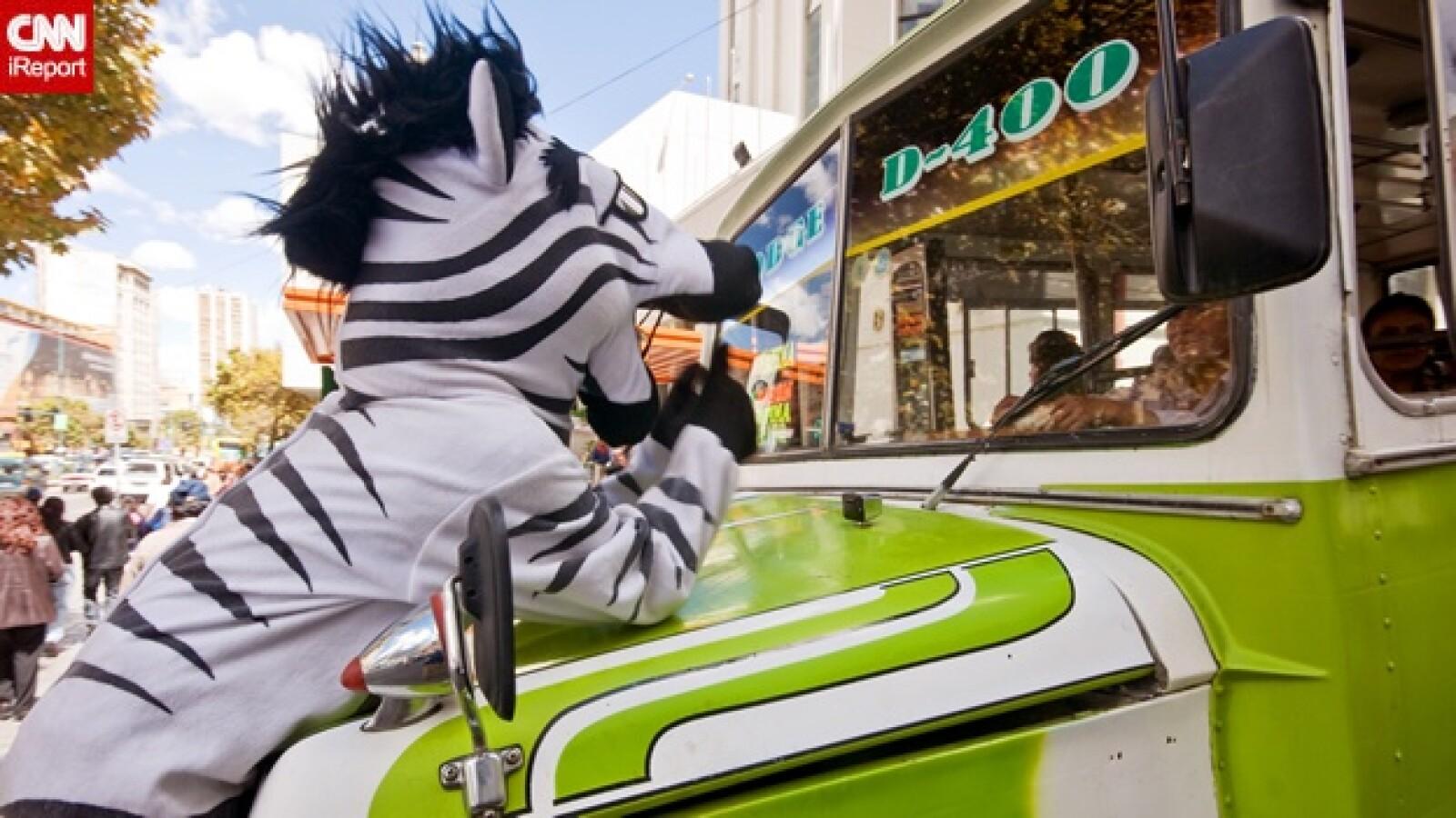 irpt-zebra-bol4