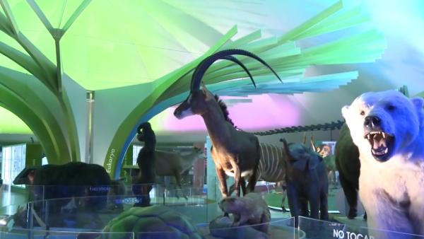 Así luce tras su renovación el Museo de Historia Natural de la CDMX