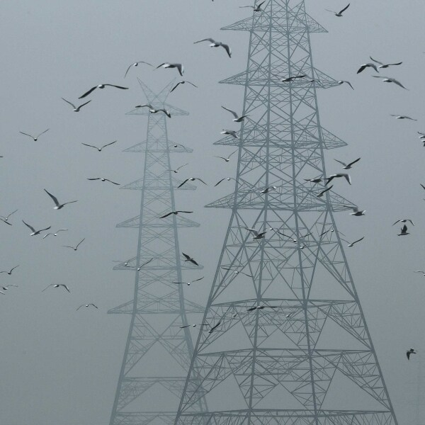 Birds fly next to electricity pylons on a smoggy afternoon in the old quarters of Delhi