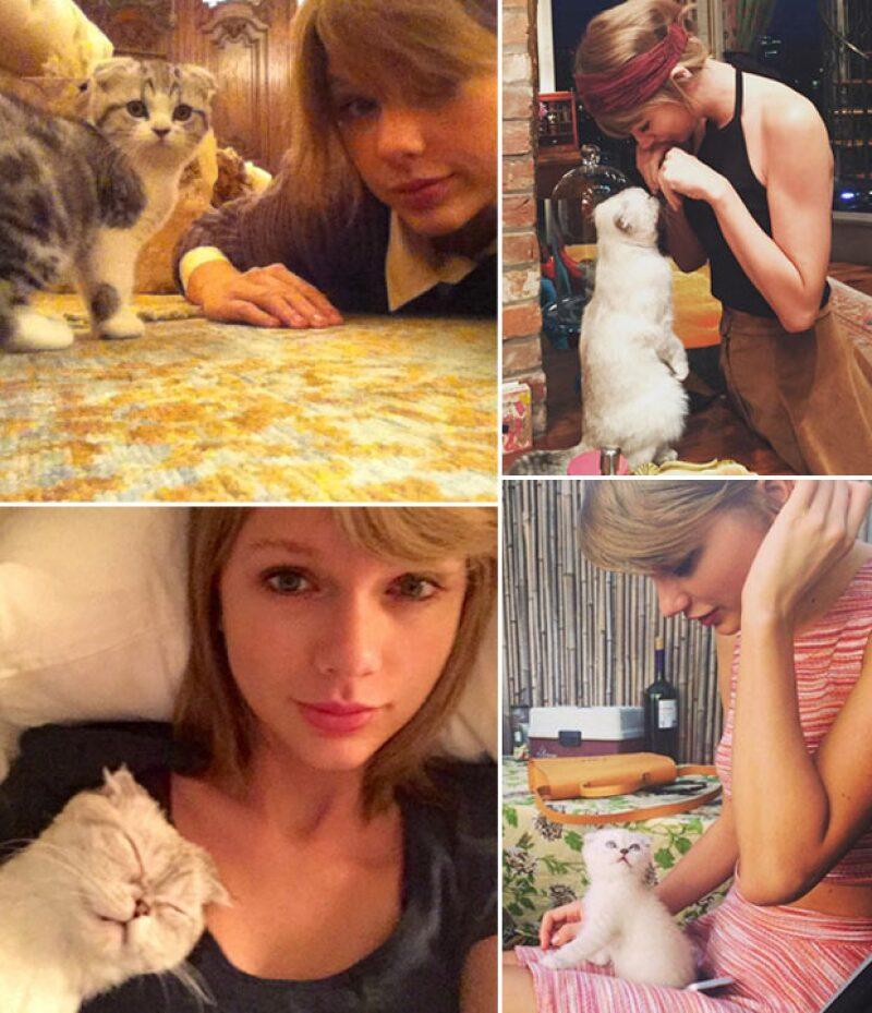 Meredith y Olivia, las gatitas favoritas del showbiz gracias a Taylor Swift.