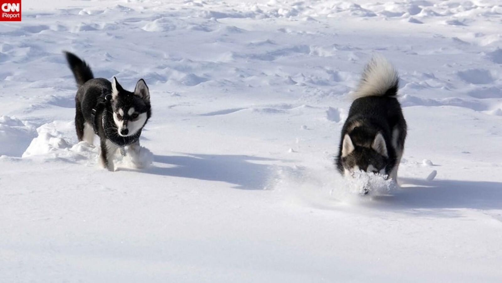 ireport mascotas nieve EU 06
