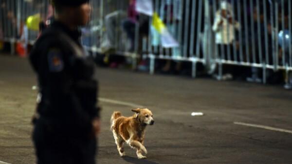 Un perro corre por una de las avenidas que el papa recorrerá en su camino a la Nunciatura.