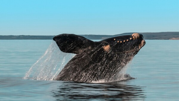 rocual-ballena-sudafrica-1.jpg