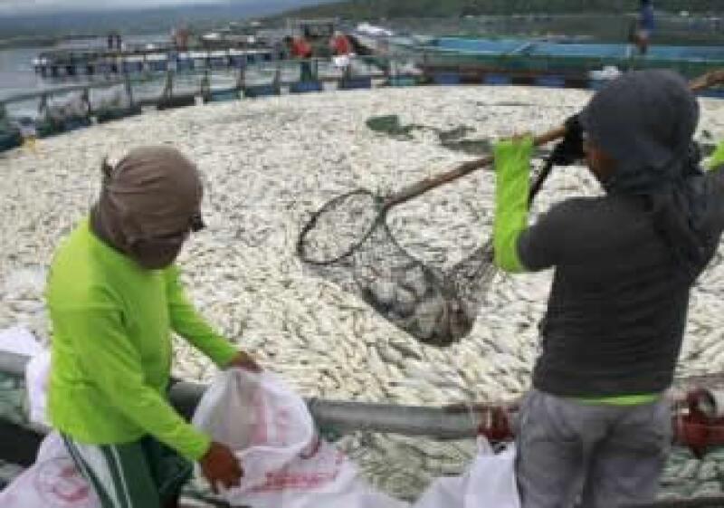De enero de 2010 a la fecha la ayuda climática de los países ricos es de 16,200 millones de dólares. (Foto: Reuters)
