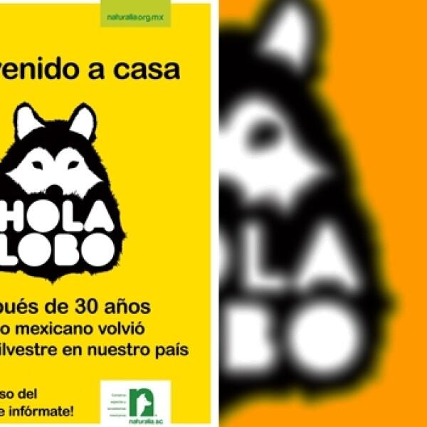Campaña Hola Lobo Naturalia 02