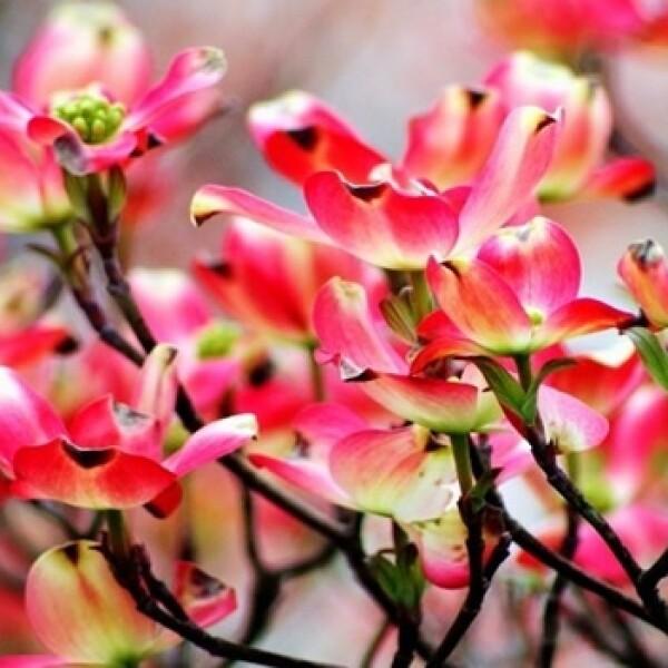 irpt-flores10