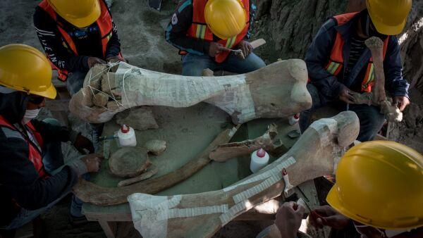 mamuts santa lucía