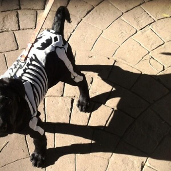 irpt-mascota-halloween8