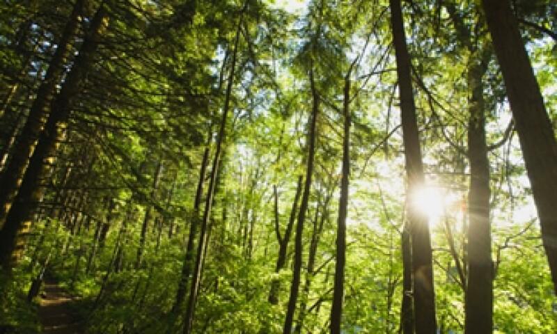 Más de 300 millones de dólares se destinarán a las iniciativas propuestas e implementadas por comunidades forestales. (Foto: Thinkstock)