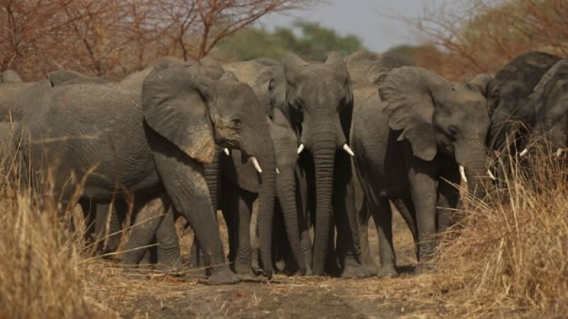 Elefantes parque Zakouma