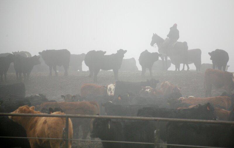 Se espera que este año la exportación de carne llegue a 250,000 toneladas.