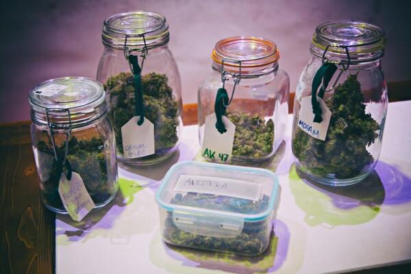 Clubes de marihuana españoles