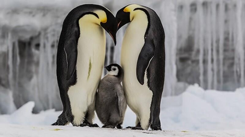 pingüino
