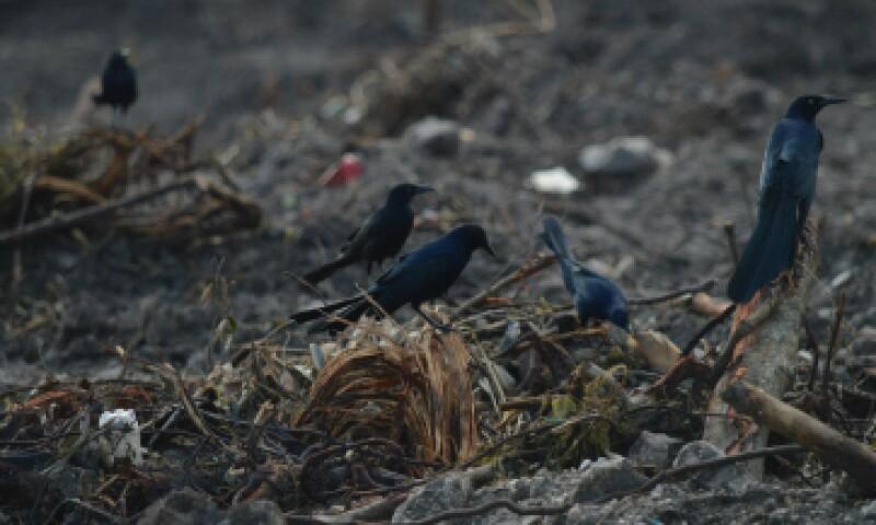 El manglar es hogar de especies silvestres como cocodrilos, iguanas y distintas aves. (Foto: Cuartoscuro)