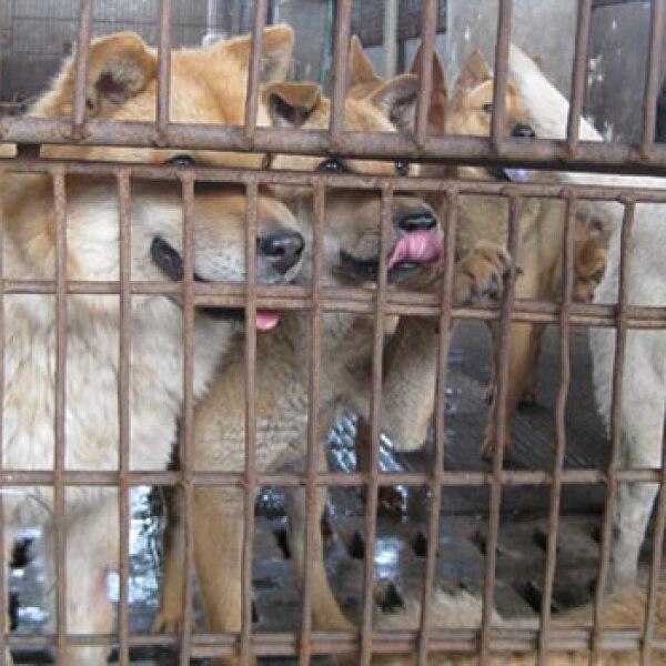 carne perros gatos prohibicion