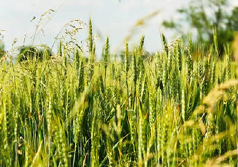 La baja de los precios internacionales de los granos mitigan el impacto de la sequía en los precios internos. (Foto: Cortesía SXC)