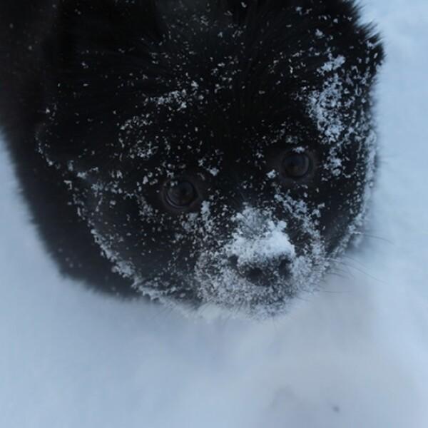 ireport mascotas nieve EU 08