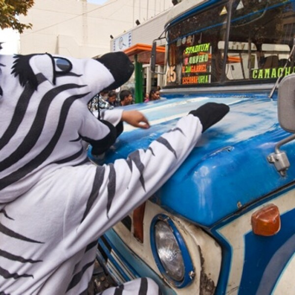 irpt-zebra-bol2