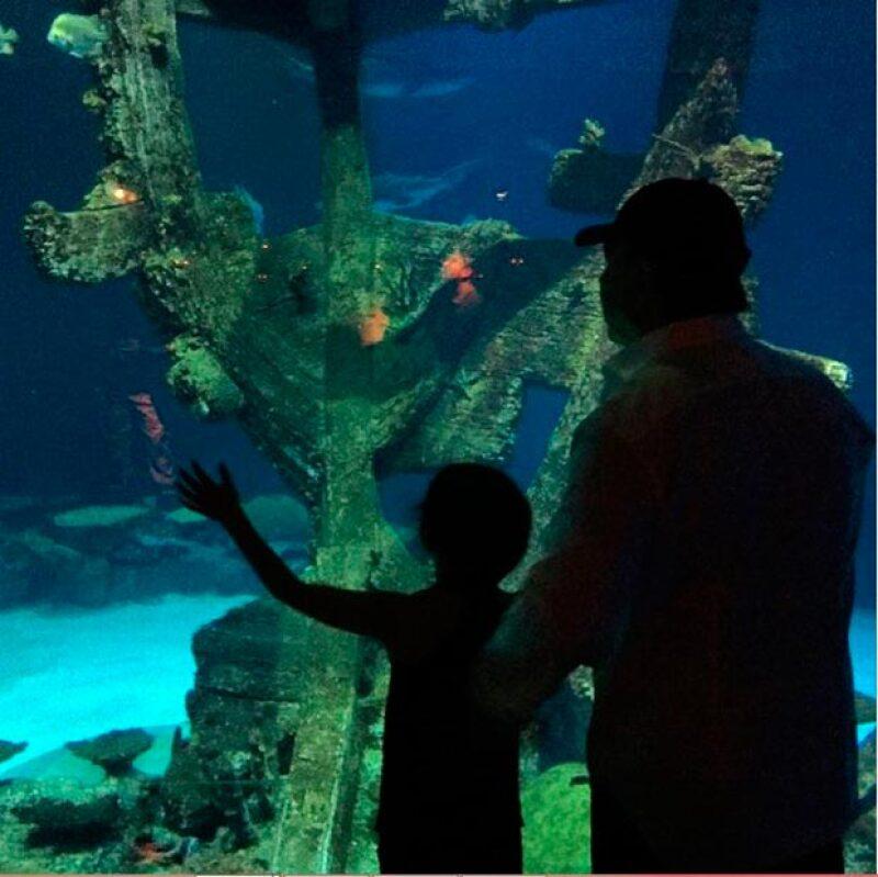 La pequeña Sabrina y Tommy Mottola admirando las maravillas marinas.