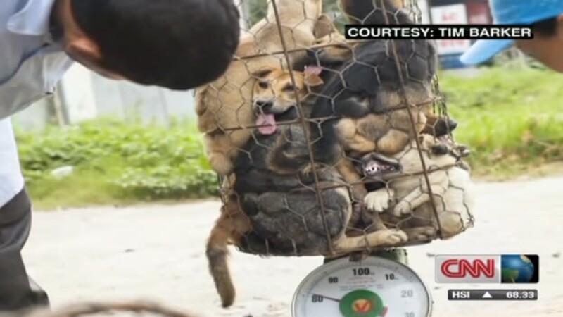 Contrabando de perros