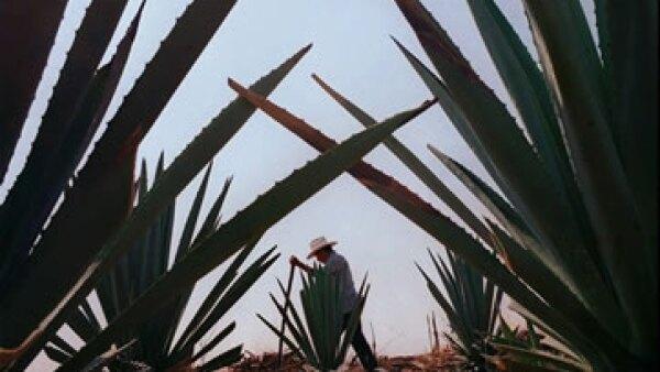 Casa Cuervo ganó 3% de participación de mercado en México en los últimos años para llegar a un total de 25%. El mercado por su parte se contrajo 1% anual de 2006 a 2011, según datos del Consejo Regulador del Tequila. (Foto: AP)