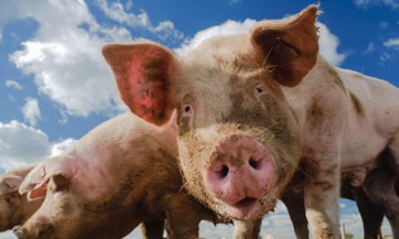 El virus se ha expandido en granjas de 13 estados de EU. (Foto: Getty Images)