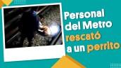 #EnSegundos | Personal del Metro de la CDMX rescató a un perrito en la Línea B
