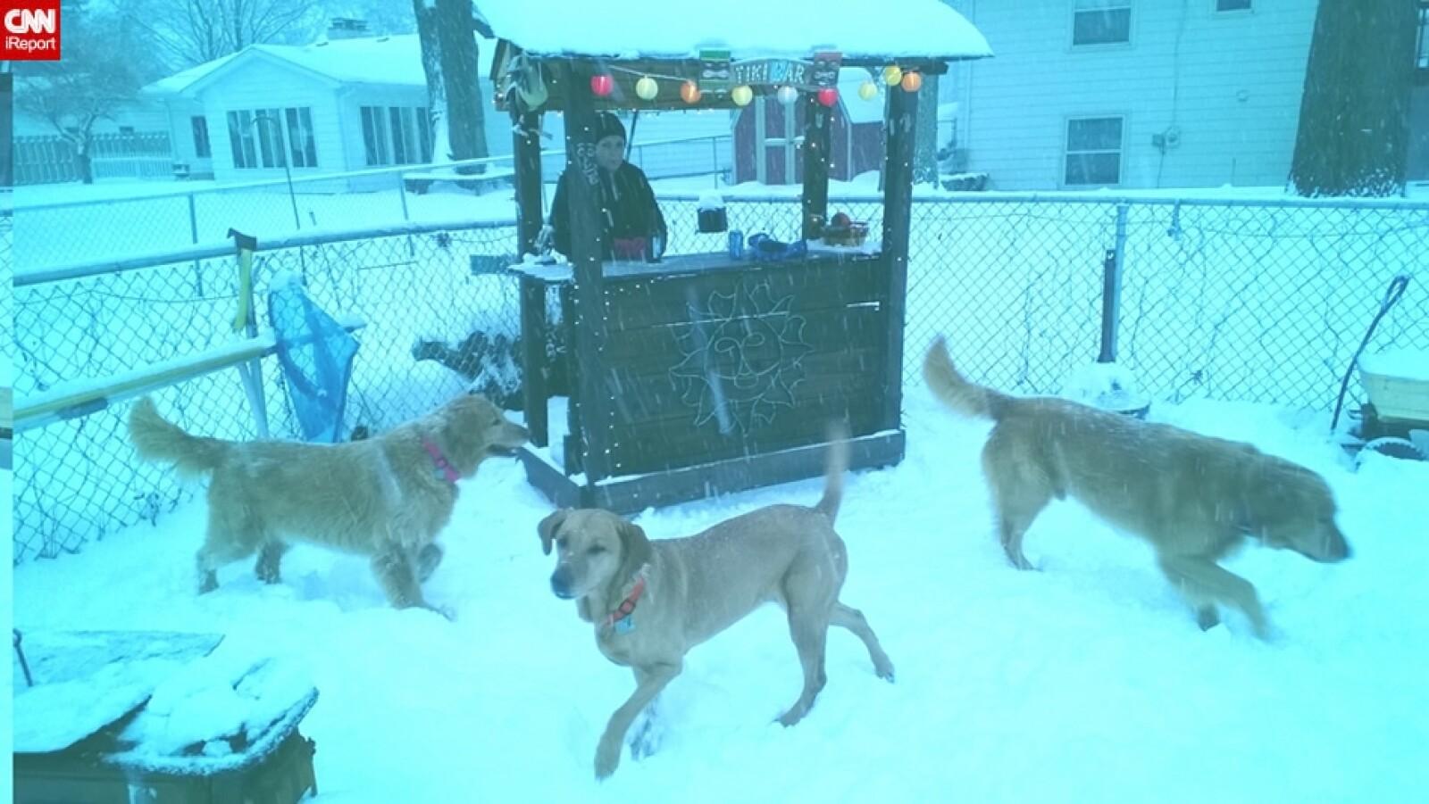 ireport mascotas nieve EU 01