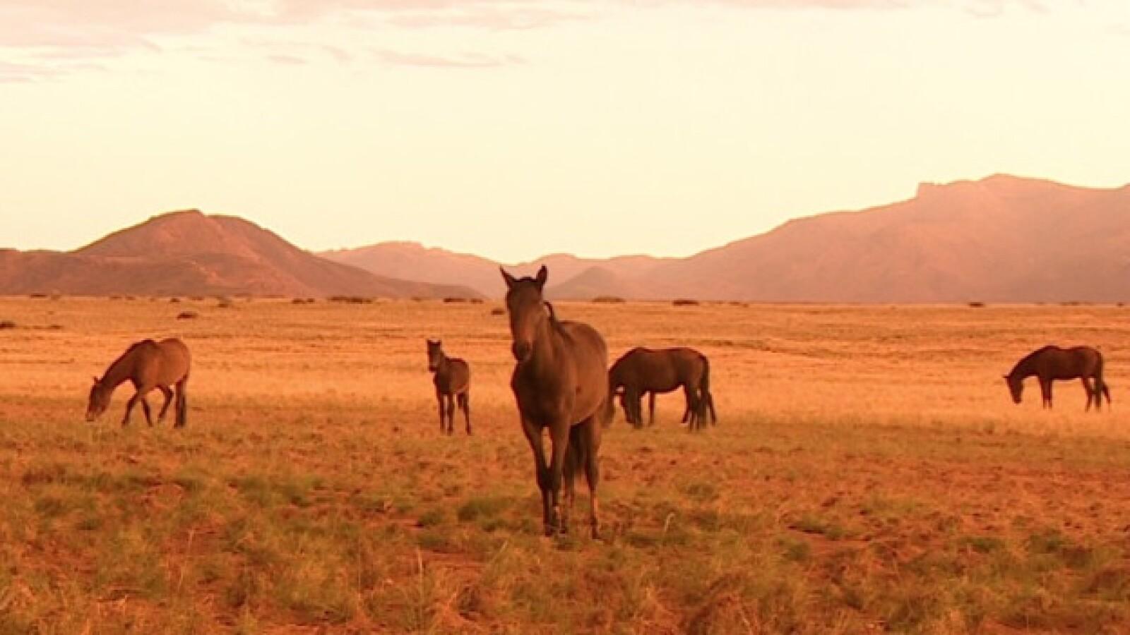 Kolmanskop Desierto Namib  africa namibia pueblos fantasma caballos diamantes