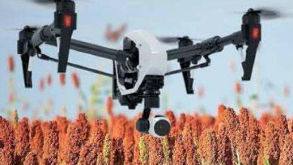 dron para cultivos de sorgo