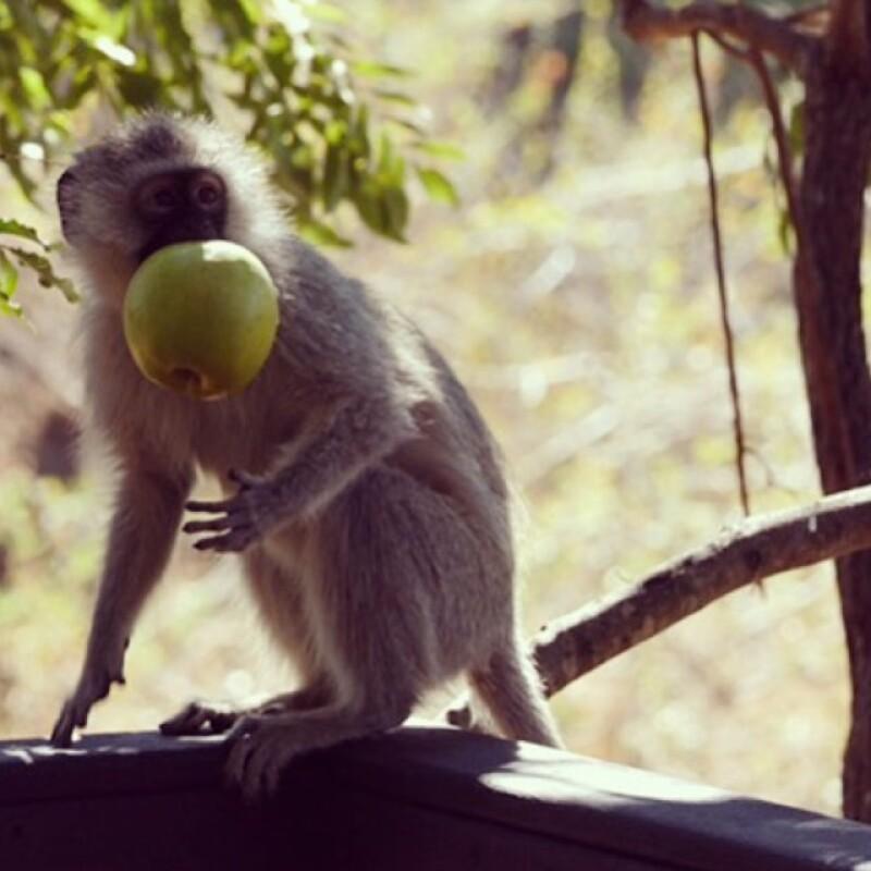 La pareja decidió empezar su luna de miel en un safari en Botswana.
