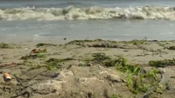 Algas tóxicas se expanden por el Mar Báltico