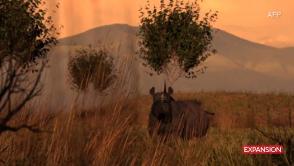 Extinción de especies_AFP