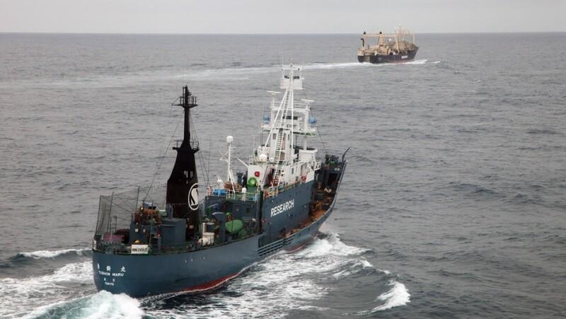 ballenas, grupo ambientalista, japon, australia, oceano, caceria, persecución, activistas, sea shepherd, oceano austral