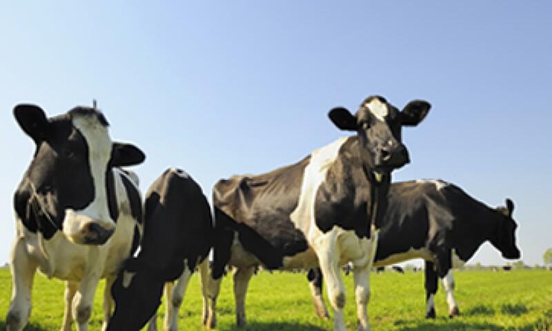 Una emprendedora se asoció con una fábrica en Uganda para frabricar joyería elaborada a partir de los cuernos de una vaca. (Foto: Getty Images)