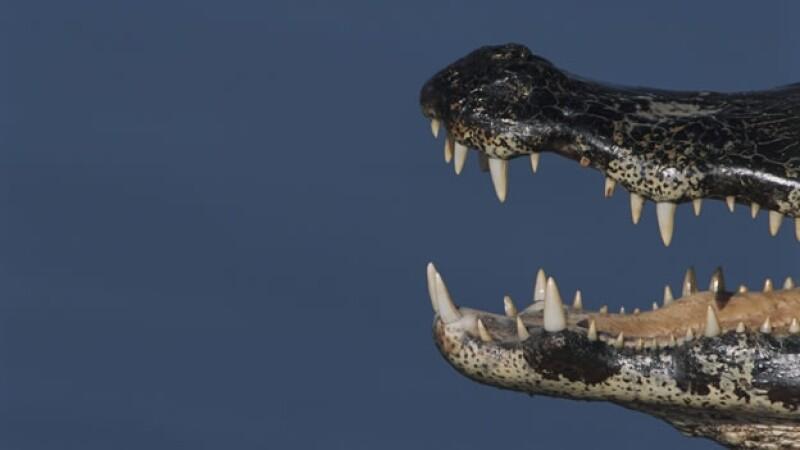 boca de un caiman