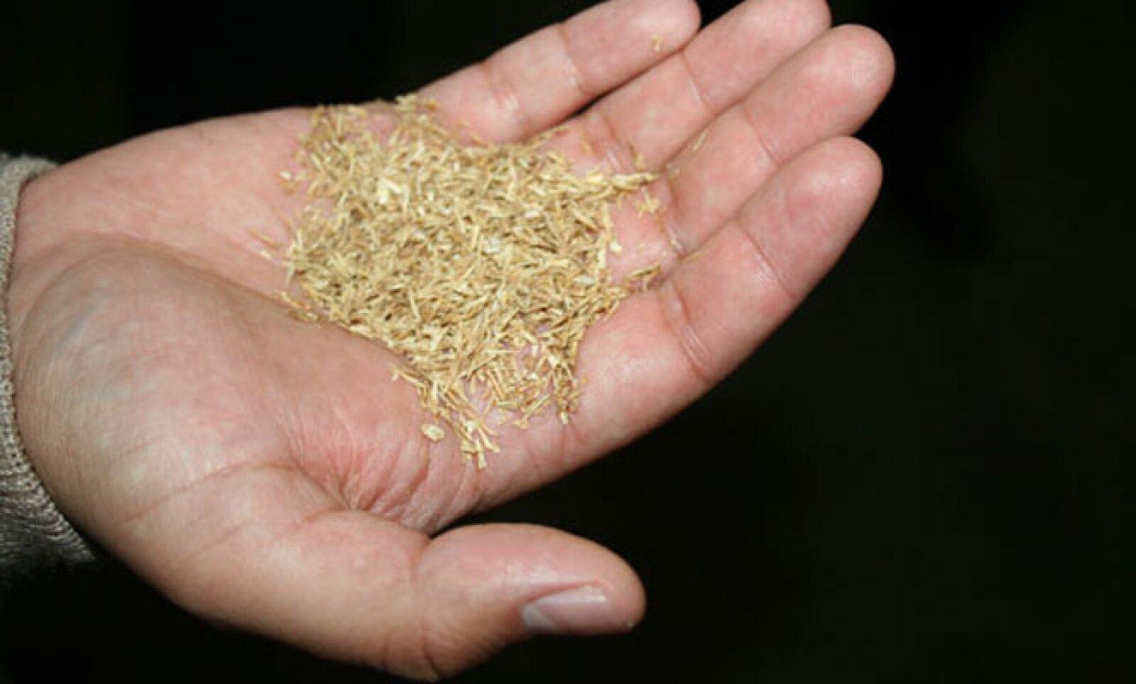Este subproducto compuesto por fibra, cascarilla y proteína, tiene su origen en la malta de cebada. Estas características hicieron que Modelo lo aprovechará para generar energía.