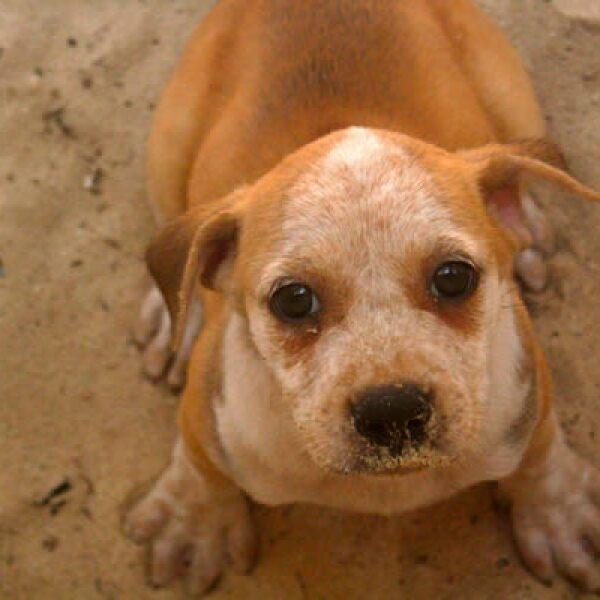 The Ritz-Carlton Cancún anunció su proyecto 'Dog Watch', en el que los viajeros cuidan y dan donativos para los perros de la comunidad.