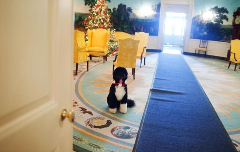 Súper elegantes y frente a un enorme árbol repleto de esferas, la pareja presidencial de los Estados Unidos compartió su imagen navideña a través de Twitter.