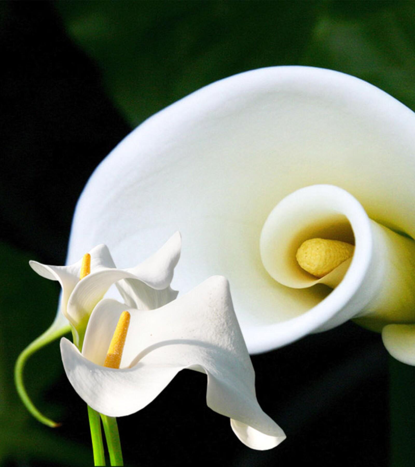 Vas A Regalar Flores Esto Significa Cada Una