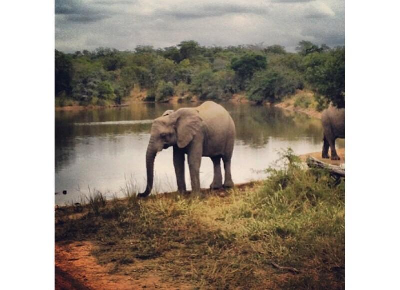 Aprovechando su gira por África, el cantante escapó a la selva para tomar una cerveza y ver elefantes salvajes acompañado de sus amigos, momento que no podía dejar de compartir en Instagram.