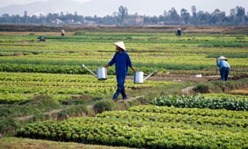 La ONU pidió más inversión a largo plazo en los sectores agrícolas en países pobres para que los agricultores aumenten sus producciones. (Foto: Thinkstock)
