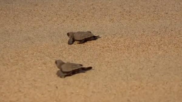 La Escobilla, una playa mexicana preferida por las tortugas marinas para desovar
