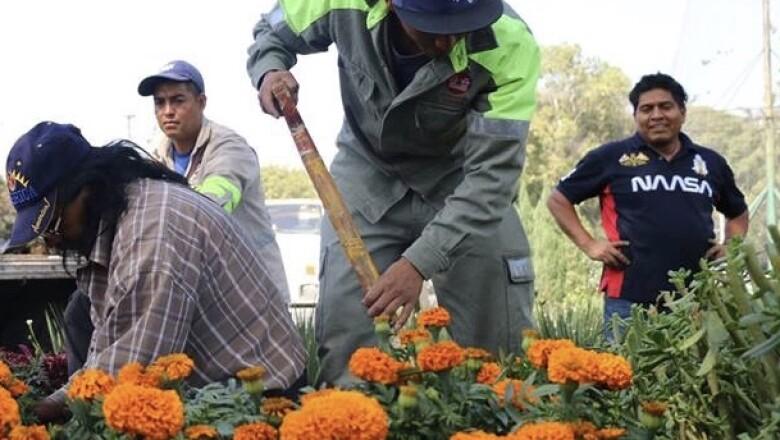flores de cempas�chitl 1