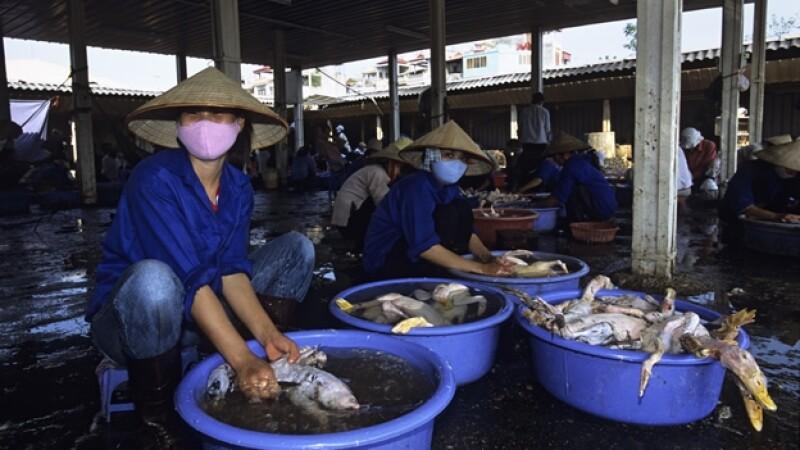 se confirma primer caso de gripe aviar en Vietnam después de 14 meses